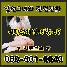 Image at ../data/upload/4/2352024